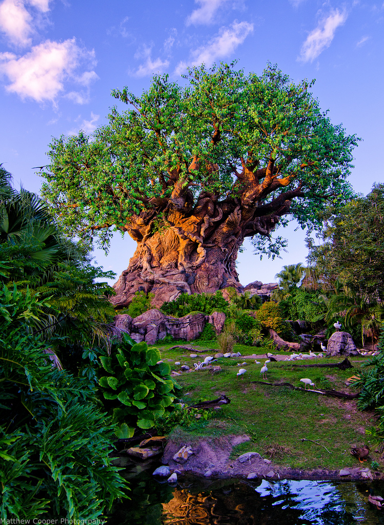 walt disney world disney's animal kingdom tree of life