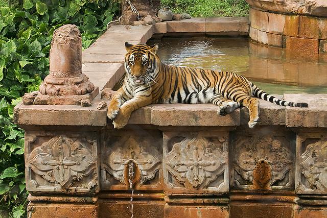 walt disney world disney's animal kingdom tiger marajah jugle trek asia area