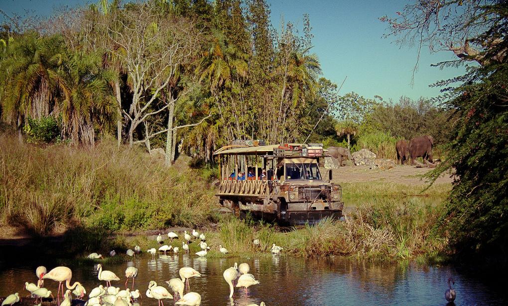 walt disney's animal kingdom kilimanjaro safaris