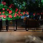Ratatouille the adventure totalement toquée de remy disneyland paris walt disney studios review service lights on evacuation 101 16
